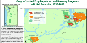 A thematic map of Oregon Spotted Frog Population and Recovery Programs in BC 1998-2010 showing populations of frogs in their habitats